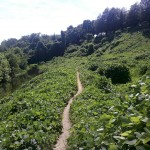 I don't have bars in this #barshot either. Check out the kudzu on Northbank Trail, #RVA- from @bvay